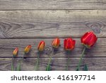 evolution of red tulip  ...   Shutterstock . vector #416197714