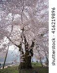 the spring in japan. | Shutterstock . vector #416219896
