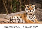 bengal tiger in forest show... | Shutterstock . vector #416231509