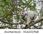 Domestic Cat In The Park  Cat...