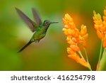 empress brilliant hummingbird...   Shutterstock . vector #416254798