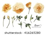 flowers and leaves  watercolor  ... | Shutterstock . vector #416265280