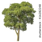 tree isolated on white | Shutterstock . vector #416282248