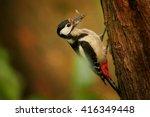 wildlife photo of forest bird ... | Shutterstock . vector #416349448