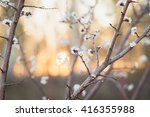 soft focusspring blooming tree  ... | Shutterstock . vector #416355988