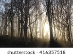 Stock photo sunrise in the forest 416357518