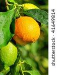 Orange and Lemons. - stock photo