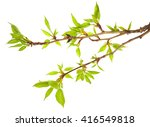 macro of young foliage on... | Shutterstock . vector #416549818