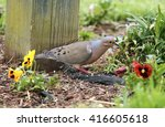 Mourning Dove In Flowers