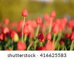 natural flowers background.... | Shutterstock . vector #416625583