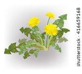 dandelion  green grass  yellow... | Shutterstock .eps vector #416659168