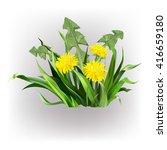 dandelion  green grass  yellow... | Shutterstock .eps vector #416659180