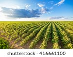 green ripening soybean field ... | Shutterstock . vector #416661100