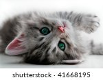 Stock photo kitten rests isolated 41668195