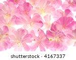 transparent pink flowers | Shutterstock . vector #4167337
