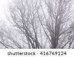 Isolated Branches Over White...
