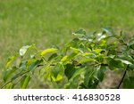 blurred green background with a
