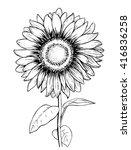 Sunflower. Hand Draw Wector...