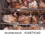 Chickens In A Cage. Birds In A...