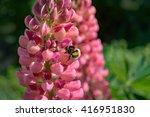 Bumble Bee Landing On Pink...