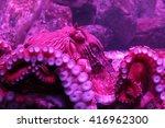 north pacific giant octopus | Shutterstock . vector #416962300