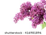 Stock photo blooming lilac flowers isolated on a white 416981896