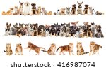 Stock photo cat and puppy on a white background isolated 416987074