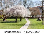 white flowers tree blooming at... | Shutterstock . vector #416998150