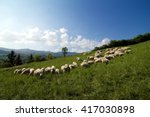 Flock Of Sheep Grazing On A...