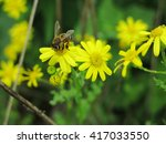 Bee Pollinating Yellow Wild...