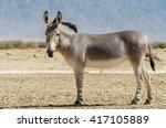 somali wild donkey  equus... | Shutterstock . vector #417105889