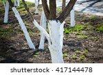 Tree Care  Tree Bark Whitewash...