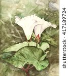 flowers and leaves of bindweed  ...   Shutterstock . vector #417189724