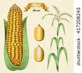 retro vintage maize... | Shutterstock .eps vector #417208243