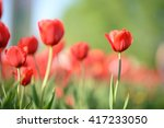 amazing nature of red tulips... | Shutterstock . vector #417233050