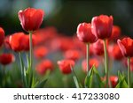 amazing nature of red tulips... | Shutterstock . vector #417233080