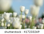 nice flower background. closeup ... | Shutterstock . vector #417233269