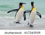 King penguins going from blue...