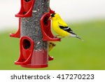 Yellow Finches In A Bird Feeder