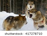two wolves fighting on snow... | Shutterstock . vector #417278710