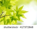green leaf of japanese maple   Shutterstock . vector #417372868