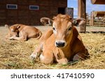 Animal Red Calf Child Cow Farm...