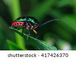 Stink Bugs Eocanthecona ...