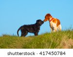 two different dogs sniffing in... | Shutterstock . vector #417450784