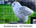 Wild Bird One White Owl Is...