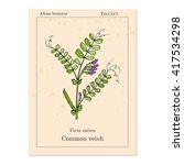 the vetch  vicia sativa   or ... | Shutterstock .eps vector #417534298