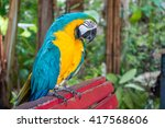 the blue and yellow macaw  ara... | Shutterstock . vector #417568606