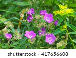 Wild Flowers In Mountain Fields