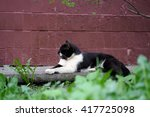 Small photo of Street cat sitting on the pavement against a wall at home. The cat is black with a white pattern on the face. Sick animals, eyes fester. The concept of the problem of stray animals in the cities.