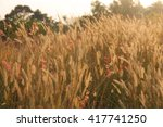 grass flowers meadow and sunset ... | Shutterstock . vector #417741250